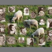 vorschau-fotopuzzle-schafe-wenig-fotos