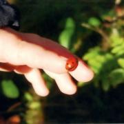 kinderhand-marienchen