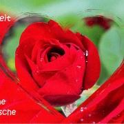 hochzeit-rose