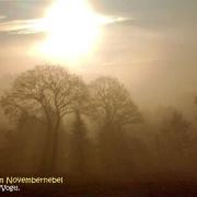 pk-kottengruen-november